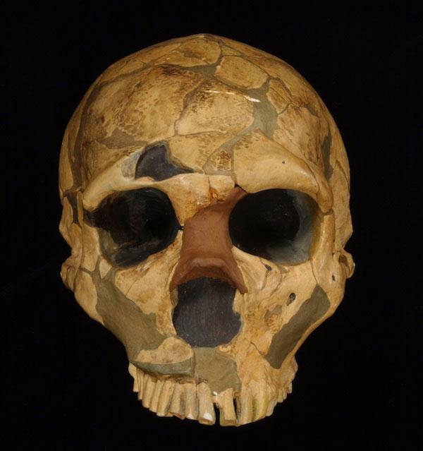 1909 yılında Fransa'da bulunan en eksiksiz Neandertal kafatası La Ferrassie 1'in kopyası. [Londra Doğal Tarih Müzesi]