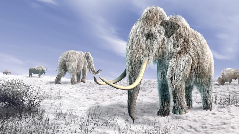 Mamut DNA'sı fillerin hayatta kalmasını sağlayabilir. [Shutterstock]