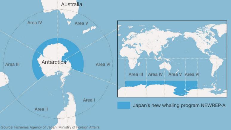 Japonya'nın avlanma için belirlediği bölgeler.