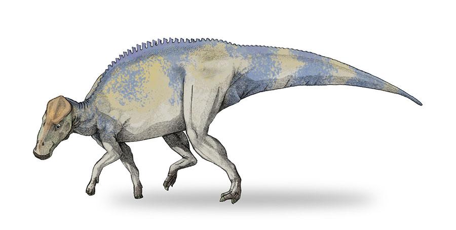 Brachylophosaurus canadensis. [Wikipedia]