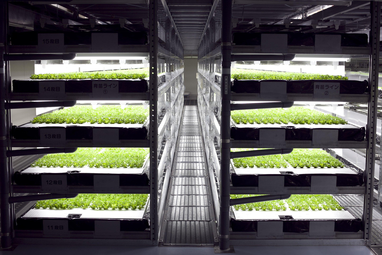 robot-farm-3